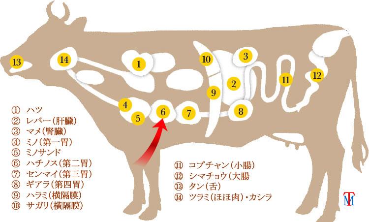 牛ホルモンハチノス