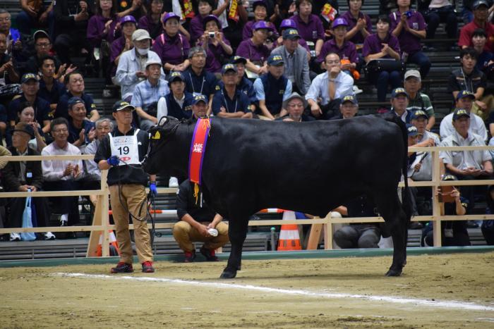 和牛ブランドランキング(鹿児島s牛)